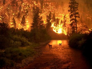Forest-Fire-21